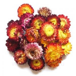 Хризантема, бутоны сушеные большие, 10 г (сухоцвет)