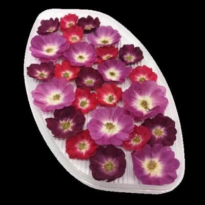 Роза обезвоженная микс (Огненный поцелуй, Пурпурный фламинго, Бордовый бархат), (5шт)